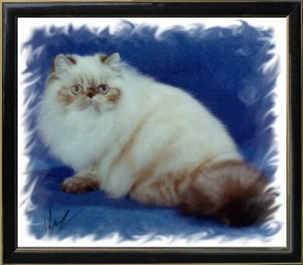 3rd Best Himalayan Kitten